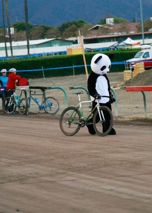 brandnewmonster:  Sad Panda No Podium.
