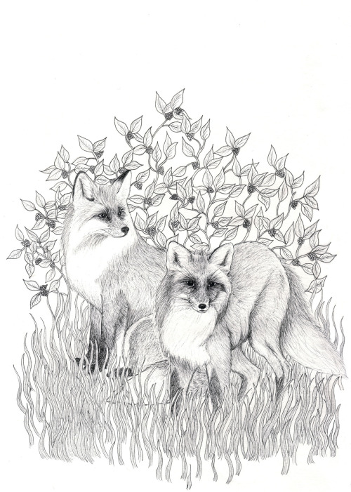 Illustration I created for my brand Flaura & Fauna http://www.etsy.com/shop/FlauraandFauna1