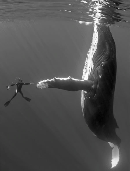 suicidelake:  exite-d:  high five bro  whale-five!