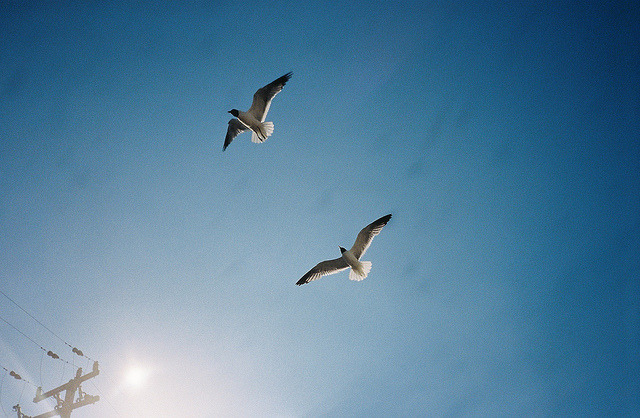 Sunset Flight /// Wildwood, NJ /// August 2011