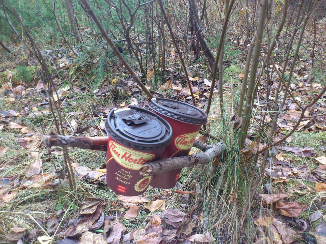 Nature's cupholder