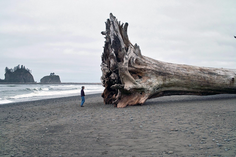 the-absolute-best-posts:  wryer: Giant driftwood on the beach at La Push, Washington (2010)  this made me feel really uneasy, the ocean is terrifying.