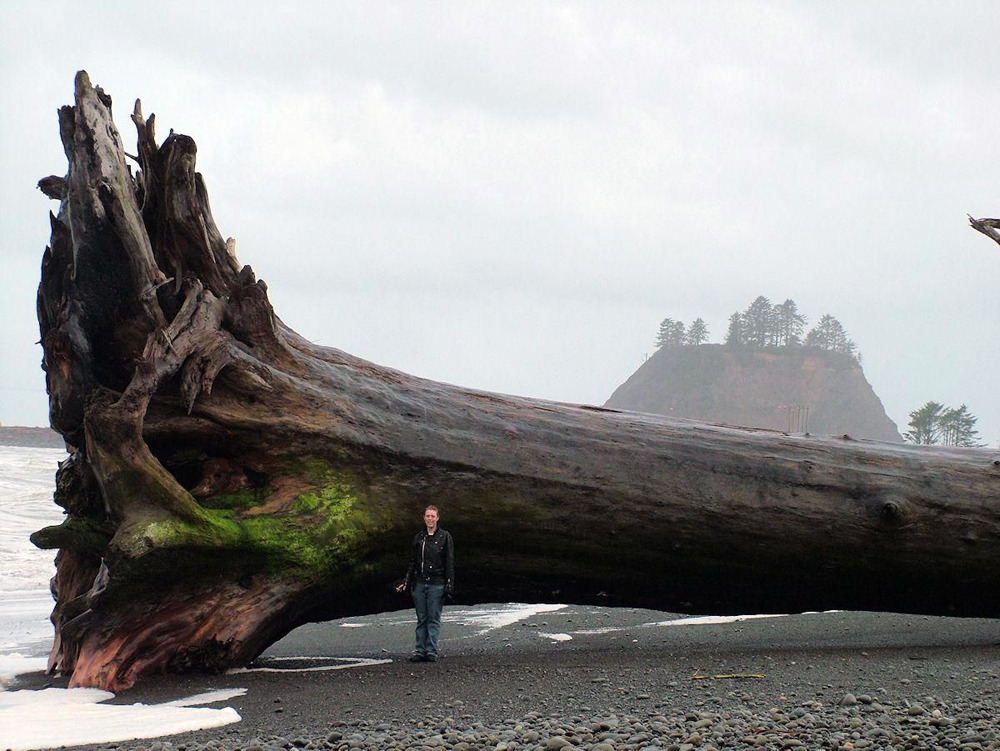 blusterousiris:       Giant driftwood on the beach at La Push, Washington (2010)   this made me feel really uneasy, the ocean is terrifying.   its like when cats bring home a dead bird and drop it at your feet except the ocean is like I HAVE BROUGHT YOU THIS ENORMOUS TREE FROM THE DEPTHS OF HELL ENJOY