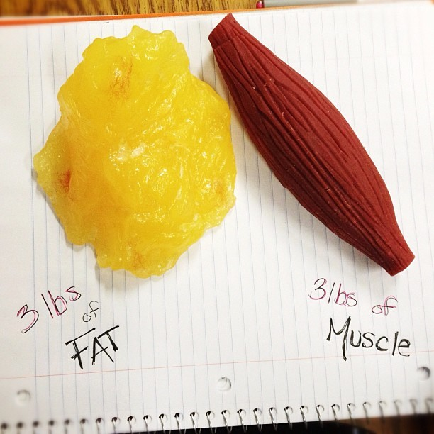 gethealthierr:  FACTS: Fat cells & muscle cells are two entirely different entities. You don't CHANGE fat into muscle. Once a fat cell is gained, it is NEVER lost. Only shrunk or expanded.  Higher lean body mass (muscle mass) results in greater insulin sensitivity, decreasing the risk of diabetes and increasing the body's ability to process food & fat for energy instead of storage. Higher lean body mass increases RMR (resting metabolic rate) resulting in more fat loss with the same or less effort. Up to 30% of weight loss from diet alone is from lost muscle mass. Sarcopenia is the natural loss of muscle mass over time due to ageing. Increased muscle mass protects from the effects of sarcopenia over time.  Resistance (strength) training increases bone density, which decreases the risk of osteoporosis.  What does it all mean? Not all exercise is created equal. Get off the treadmill, pick up something heavy and build yourself some muscle. There is more to working out than weight loss. This is NOT about skinny - this is about long term health and mobility.