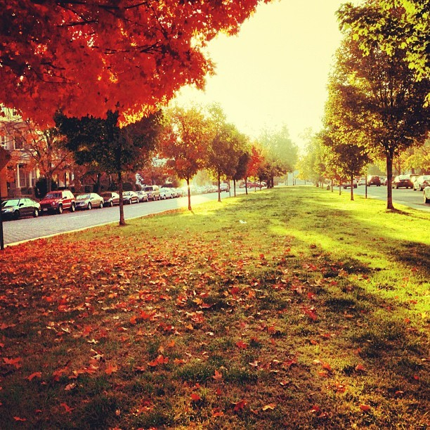 enicoleh:  richmond looks best in the fall (even when there's a high of 81 💀)