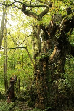 myelvenkingdom:  voiceofnature:  Me and a magical huge scottish chestnut tree, by Rob Wildwood  My beautiful friend in her true element ^^Check out her tumblr/blog guys!