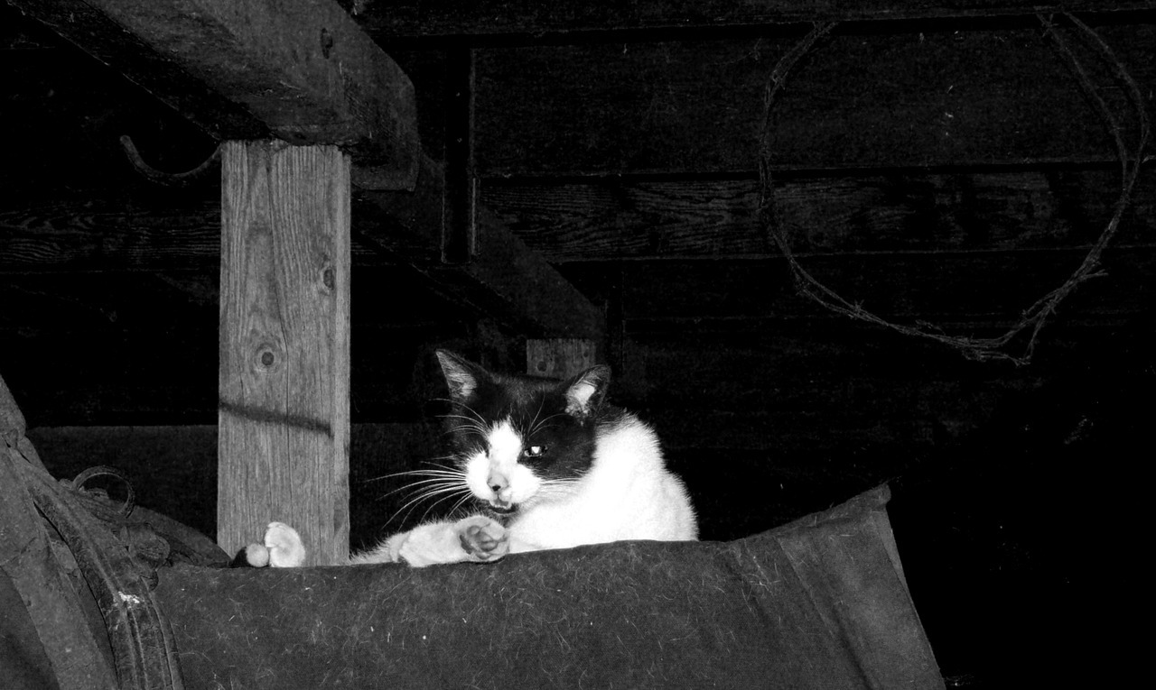- One Eyed Barn Cat -