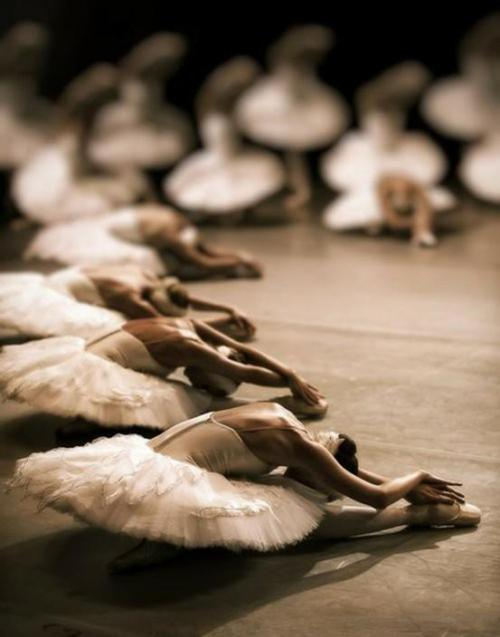 Lovely swans. All in a row.