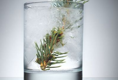 "theatlantic:  Sprucing Up Your Cocktail  Spruce was a familiar flavoring in the 18th and 19th centuries, especially if you lived up north. It was found in tea, in beer, and perhaps most commonly in chewing gum—spruce gum was produced commercially all the way until the 1970s. ""I have tended evening meetings up in Maine,"" noted the writer Henry Wheeler Shaw in 1877, ""and everybody was chewing gum except the minister."" The taste of spruce resin is quite potent, described by one late-19th-century writer as ""sweet, peculiar and balsamic."" In my experience, spruce engages not just the senses of smell and taste, but also a more primitive part of one's brain, conjuring a dank and loamy forest. I'm mystified that a flavor this large and powerful has been forgotten by consumers.  Read more. [Image: Jeffrey Westbrook]"