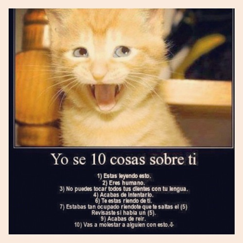 #i #know #10 #thing #about #you #cat #kitty #list #love