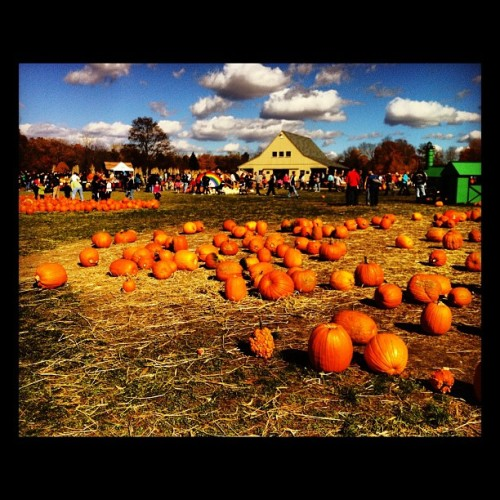 Pumpkin Patch!!!! #instagood #pumpkin #pumpkins #sky #clouds #orange #blue #pumpkinpatch #pretty #jonespumpkinpatch #jones #funday #halloween #fall #autumn #friends #pumpkinpicking #connecticut #huntington #mywestsidestory
