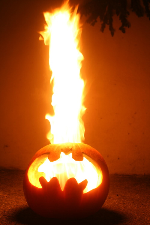 thugkitchen:  fuck putting a tealight in a pumpkin. I'm Batman, bitch. want a bomb ass jack-o-lantern like my shit? get yourself a mother fucking pumpkin. carve that bitch up any way you god damn well please. (set pumpkin seeds aside to roast them later. tasty as hell and makes your house smell like a fucking yankee candle factory) just make sure you carve the lid large enough to fit a roll of toilet paper. when you're done carving your shit, soak an entire roll of toilet paper in kerosene (or lighter fluid). I recommend pouring about a half a quart of kerosene in a bucket and placing the TP inside, it will absorb within ten minutes or so. I also recommend doing this step outdoors in the shade where there is ventilation. when the sun goes down, torch that bitch. the TP will burn slow and flames can get up to 4 feet high. leave the lid off the pumpkin, otherwise it will diminish the flames. obviously there are a handful of dumb sons of bitches that see something awesome and hurt themselves in the process of recreating. so I'm not even going to tell your stupid ass to keep a bucket of water or working garden hose nearby. if you're dumb enough to do this without taking proper safety precautions then I hope you catch fire too. remember, a safe thug is a happy thug. did you try this? show me your carvings. reblog this and attach a picture of your pumpkin.