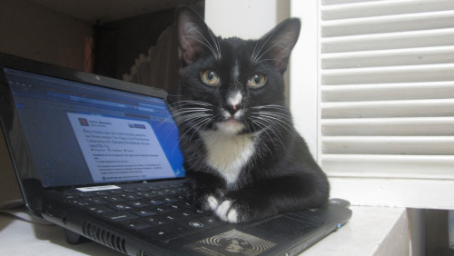 "STUDY: Twitter Kills Feline Productivity According to a new study from the Pew Research Center, Twitter is a terrible drain on the productivity of cats.  Researchers tracked a group of 150 cats throughout the workday in the largest known study of its kind and found that the number one reason cats get distracted from napping is Twitter. ""Cats, especially house cats, love Twitter,"" said lead researcher Roger Colles. ""It allows them a unique channel to stay connected while also providing an outlet for their vanity."" However, says Colles, Twitter is also a major time suck.  ""There are many valuable napping hours wasted tracking the latest hashtags,"" he said. Via Julian Ortega Martinez."