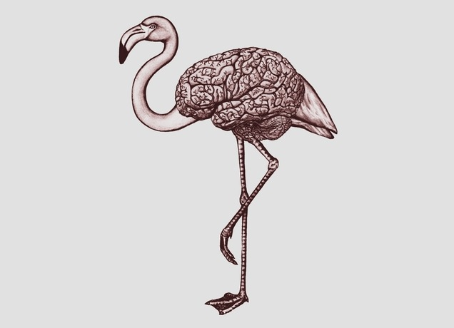 'Bird Brain' by Jason McDade