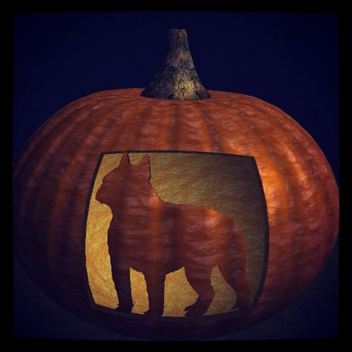 Boston terrier pumpkin