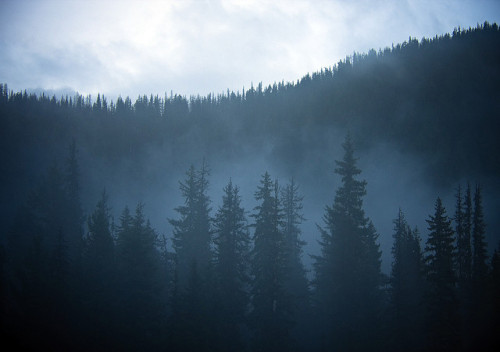 suffocating-sight:  Forest Mist by justb on Flickr.