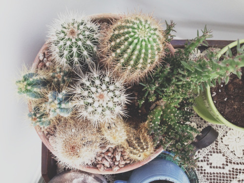 -swell:  ever since I got these cacti I've watered them with ice tea and ever since they've grown ahah