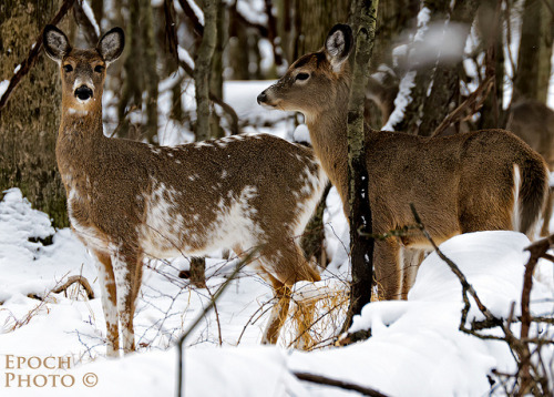 Deer by Epoch Photo on Flickr.