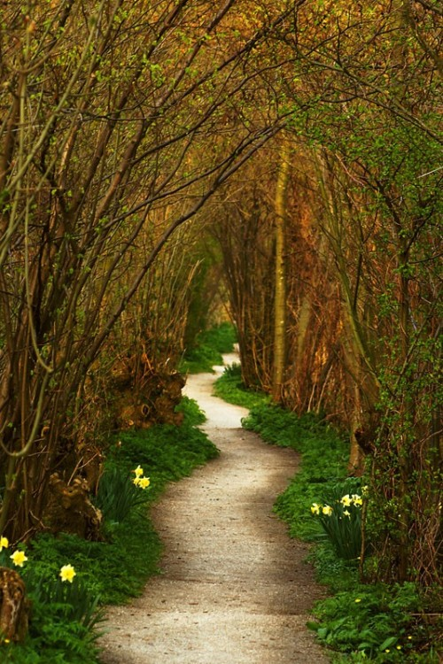 Forest Path, Leiden, The Netherlands photo via bill