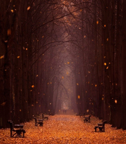 bluepueblo:  Falling Leaves, Minsk Botanical Garden, Belarus photo via chiraq