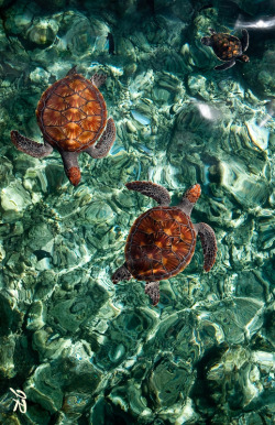 0rient-express:  Fragile Underwater World. Turtles. Maldives (by Jenny Rainbow).