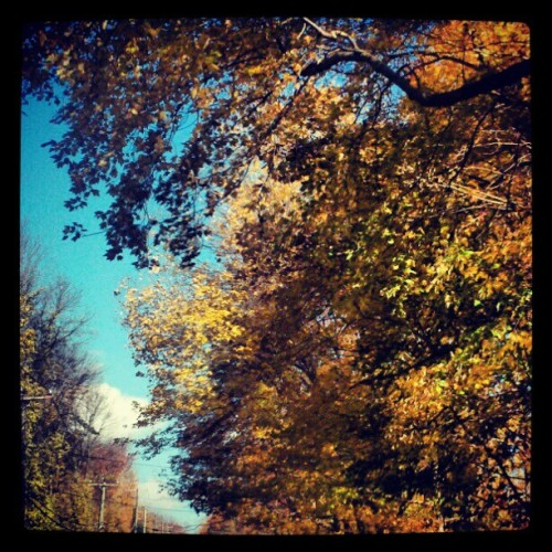 (Day 24) #weather #fmsphotoaday #autumn