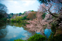 Shinjuku Goyen Park, Tokyo, Japan. submitted by: chinoytraveler, thanks!