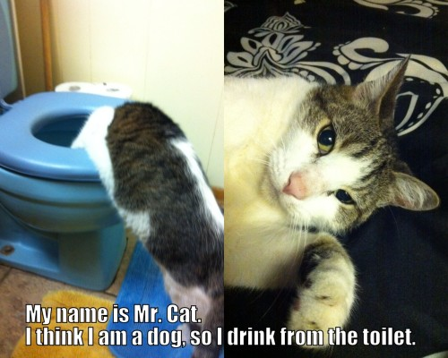 cat-shaming:  My name is Mr. Cat. I think I am a dog, so I drink from the toilet.  This is why toilets have lids.  You know..that flap thing that covers the hold that you didn't put down….  My cat does this, too, then he plays in his litter box and gets kitty litter paw prints all over my furniture. Lids are your friend.