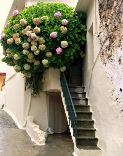 homedesigning:  (via Flowers on Balconies)