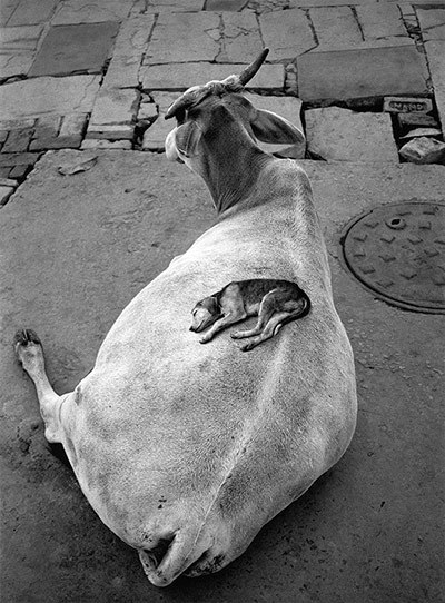 Varanasi, India, 1999 Photograph: Dewi Lewis Publishing