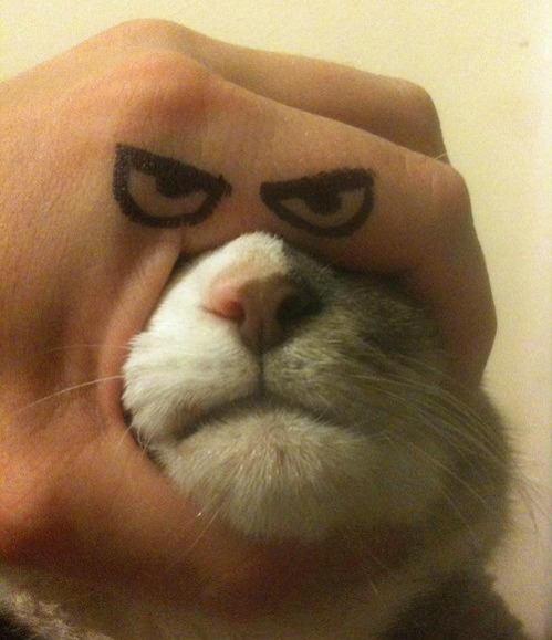 tastefullyoffensive:  How to make your own Grumpy Cat.[via]