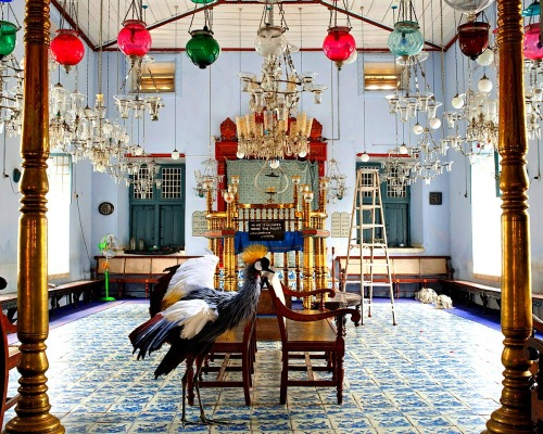 "imperiovida:  Karen Knorr  - ""INDIA SONG"" series - Exodus"