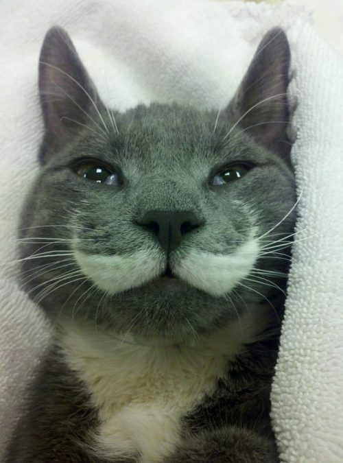 confusionandsimplicity:  this cat is dashing