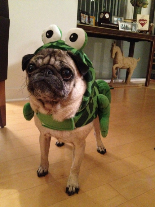 i-am-ashleigh:  My little frog.(: