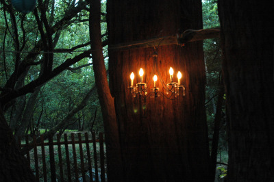 bluepueblo:  Redwood Chandelier, Northern California photo by lisa