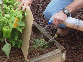 When nasty weeds pop up, don't reach for the weed killer. Douse them with vinegar, lemon juice or boiling water instead. The weeds will likely shrivel in a day or so. Resilient ones rarely withstand a second treatment.