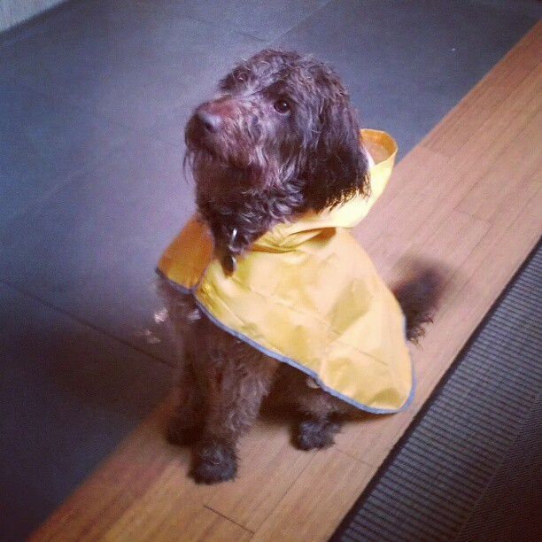 My dog has a raincoat…