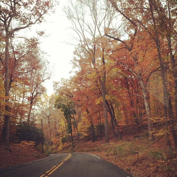 #beautiful #scenery #fall #road #hills #leaves #color #trees #myfavorite #stuckintime #driving
