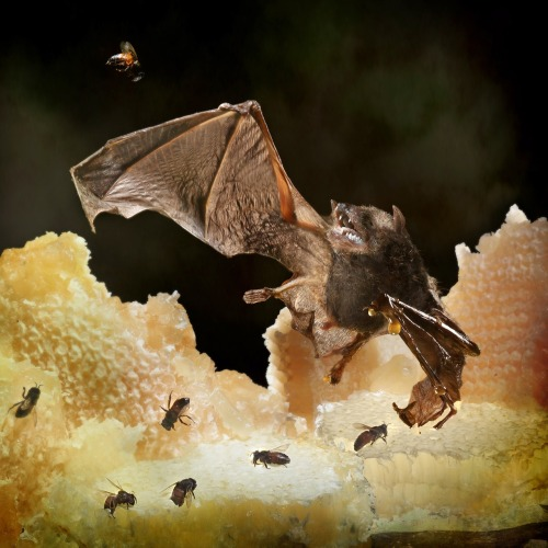 A Hallowe'eny image. Apologue -The bat and the Bees.
