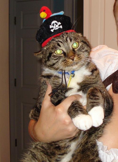 FACT: It's hilarious when you put a hat on a cat. Cat + hat = success. ANOTHER FACT: You pet owners are highly likely to put something hilarious on your pet this weekend. Send me those pictures and be a success like Toby here, an entrant in last year's Halloween contest! (Thanks for the picture of Toby, Roxie B!)