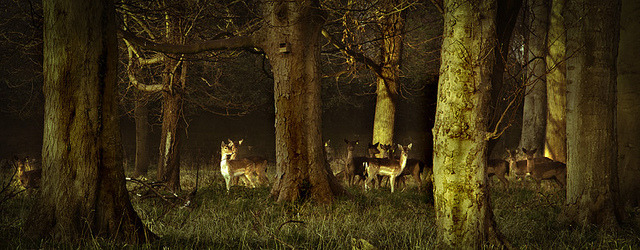 The beautiful deer by janetmeehan on Flickr.