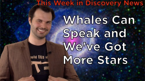 TWiDN: Whales Can Speak and We've Got More Stars  This week in Discovery News you'll be shocked to hear the sound of a whale talking. Plus, see some hi-res photos of the most ancient language yet to be decoded and a SUPER high definition photo of our galaxy. If you want to buy any of the shirts Trace wears, visit DiscoveryNews.com/Shirts!