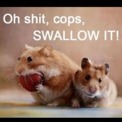 Good 'breaking the law' sunday morning to you all ! #cute #funnyanimals