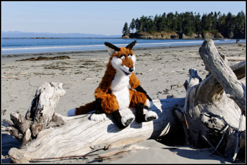 Foxy beach vacation I made the fox hand-puppet for the Eurofurence 18 Pawpet-Show. The mouth is played with the puppeteers hand. Eyelids and ears are moveable and can be controlled via bowden cables.The head is made with foam and plastic-mesh. Teeth and nose are hand-sculpted with plaast (a polycaprolactone - biodegradable polyester with a low melting point of around 63°C). The body is made of foam and hollow.The puppets can be played thru the back of the neck or the body. The arms and legs are build with flexible joints. The hands have a bendable steel wire in them.They are connected to aluminium rods.
