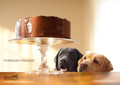 petapeta:  Exclusive Interview: Photographer of the Wonderfully Witty Dog Portraits - My Modern Metropolis