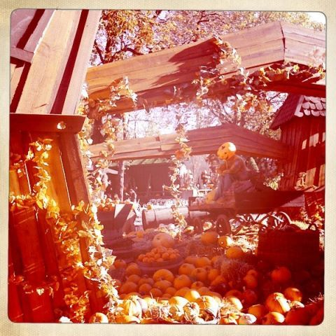 It's pumpkin mania at Tivoli!