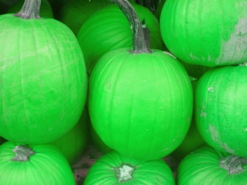 Top 5 Ways to Have a Green Halloween
