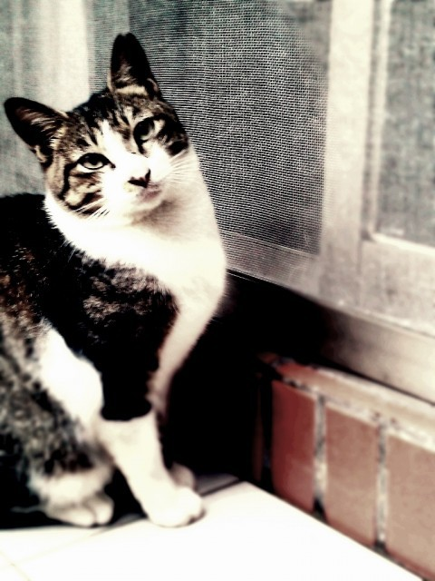 cat by Teamax on EyeEm