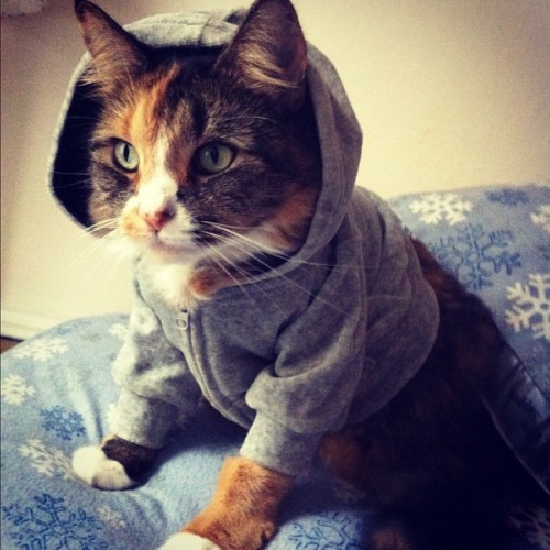 starsinjenseyes:  Napkin was hipster cat for Halloween. (Alternately: ready for Frankenstorm.)