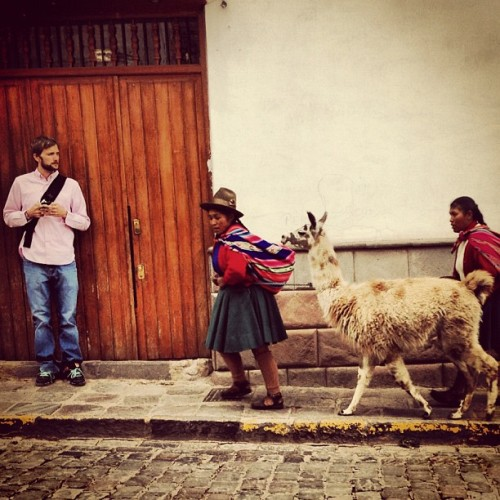 Watch out @beerad! Llama coming thru! (at Cuzco)